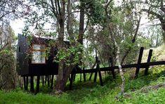 Dormir e acordar no meio da floresta. Casa de madeira no Chile pousa suavemente na mata