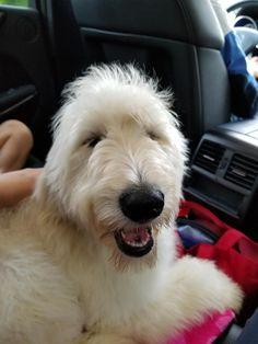 My new best friend. Reddit meet Sadie! http://ift.tt/2r9mLXj