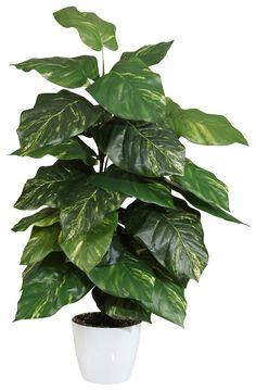 Artikeldetails:  Naturgetreue Pothospflanze, Mit 33 Blättern aus Textilgewebe, Höhe: 90 cm,  Material/Qualität:  Kunststoff, Topf aus Keramik,  ...