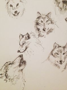 Wolf sketches for a logo | Instagram: @themelodyh