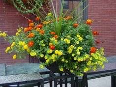 Marigolds make great container plants, blooming all summer.