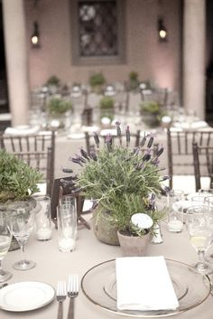 Lavender is a trending color! Consider our lavender wedding decor ideas to give your wedding style a delicate, tender look. Potted Plant Centerpieces, Lavender Centerpieces, Centrepieces, Lavender Potted Plant, Potted Plants, Egyptian Wedding, Event Planning Design, Wedding Decorations, Table Decorations