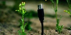 USB Flowers Growing