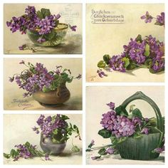 Vintage violet postcards