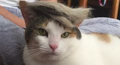 RT CollegeHumor: People are Giving Their Cats Donald Trump Toupees and it's the BEST http://www.collegehumor.com/post/7027015/people-are-giving-their-cats-donald-trump-toupees-and-its-the-best?utm_content=buffer508b5&utm_medium=social&utm_source=pinterest.com&utm_campaign=buffer https://twitter.com/CollegeHumor/status/620711367985643521/photo/1?utm_content=buffer69907&utm_medium=social&utm_source=pinterest.com&utm_campaign=buffer