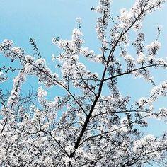 [33] #gratitudejournal • ... und überall, wo ich hinschaue, erblüht meine Stadt. #Hamburg 💙 . . . #tellyventure #goals #motivation #peaceofmind #potd #lifegoals #positivemind #lifelessons #summer #mindfulness #lifestyle #instagood #beautiful #spring #inspiration #weekendvibes #goodvibes #mindset #gratitude #kindness #happylife #quotestoliveby #happiness #happy #girlpower #strong #summer #flowers #nature #spring