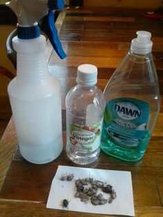 BUG SPRAY - Step 1. - 2C hot water ~ Step 2. -  1C vinegar ~ Step 3. - 1/2 C Dawn ~ MUST do it in order to avoid suds Stink Bug Repellent, Insect Repellent, Fly Repellant, Stink Bug Spray, Bug Trap, Diy Pest Control, Garden Bugs, Diy Cleaning Products, Remedies