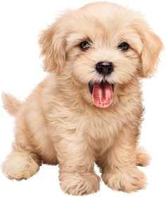 tubes chien chiot dog - Page 19 Kittens And Puppies, Cute Puppies, Cute Dogs, Cute Baby Animals, Animals And Pets, Puppy Images, Cute Animal Pictures, Cute Creatures, Dog Art
