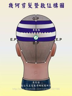 橫髮片劃分(Horizontal parting)在第2設計區的構圖-後側呈現