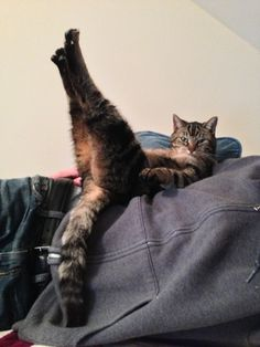 How my cat Dave was laying. He does this all the time! - Imgur