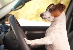 Разкарай се от пътя! Закъснявам за срещата ми в зоомагазина!