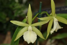 pretty Orchid Images, Orchids, Banana, Fruit, Pretty, Plants, Bananas, Plant, Fanny Pack