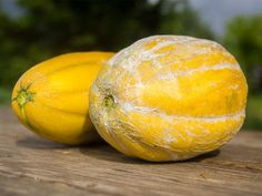 """A friend recently told me, """"You have a passion for melons."""" We had been talking about Israeli melons — that I grow them because they' Growing Melons, Hydroponics, Restaurant Bar, Farmer, Pumpkin, Vegetables, Green, Texas, Cottage"""