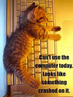 COMPUTER out of order Kittens Cutest, Cats And Kittens, Cute Creatures, Animal Gato, Sleepy Cat, Here Kitty Kitty, Baby Kitty, Photo Chat, Animals Beautiful