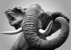 (Their beauty is Amazing) by Louis Gaillard. Beautiful Creatures, Animals Beautiful, Ivory Trade, Elephants Never Forget, Elephants Photos, Elephant Love, Elephant Stuff, Gentle Giant, African Elephant