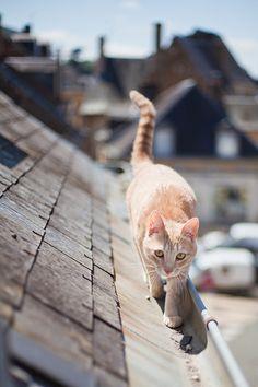 La gatta sul tetto che scotta.