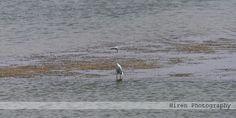 Click By Hiren Rathod place at a rajashthan malada Lake.....