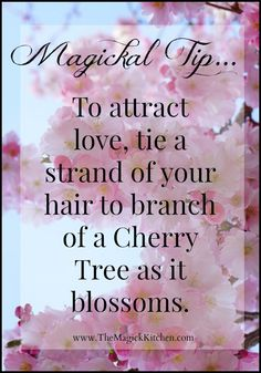 Magical Tips The Magick Kitchen Cherry Blossoms