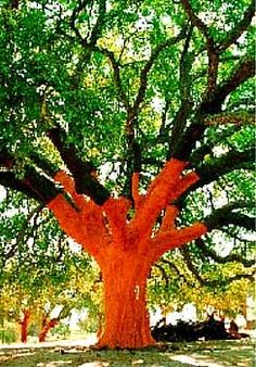 Google Image Result for http://contempofloorcoverings.com/wp-content/uploads/2009/04/cork-tree.jpg