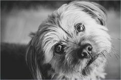 Murphy - Spoiled Dogs.jpg