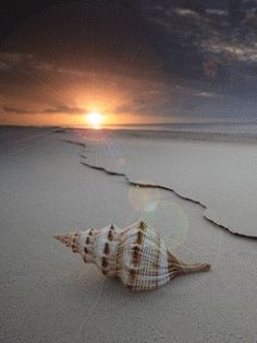 Lonely sea shell