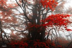 Tree of passion by Janek Sedlar on 500px