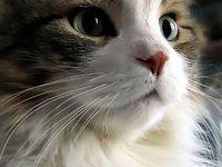 Rosa del deserto  Adorable cat!!!!