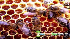 Beneficios de la miel de abeja en la cara - Miel de abeja para la cara  http://ift.tt/1SEqotn  Quieres Recibir más Videos? SUSCRIBETE A MI CANAL =========== OTROS VIDEOS SUGERIDOS ============= #L4# #LC3# #LC3# #LC3# #LC3# =============================================== Beneficios de la miel de abeja en la cara - Miel de abeja para la cara. Las propiedades de la miel de abeja son ampliamente conocidas y sus beneficios en el cuerpo humano son altamente valorados. Beneficios de la miel para la…