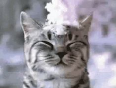 Snow on head cat