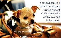 ;). I think what makes me laugh so hard is the chihuahuas eyes. Pretty sure that's what he is thinking.
