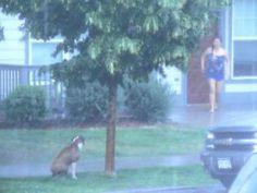 Cruel dueño deja a su perro amarrado a un árbol durante tormenta. ¡No al maltrato animal!