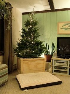 Christmas tree planter decor, Christmas tree plant, 2013 Christmas home decor #Christmas #tree #planter #decor www.loveitsomuch.com
