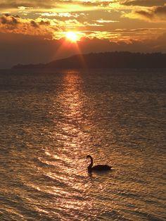 Taupo Lake Sunset, New Zealand