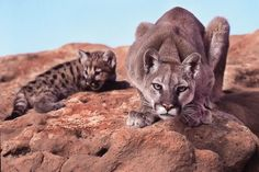 Photo Contest 2012 Winner, Wildlife: Protective Mother, by Carlene Cunningham