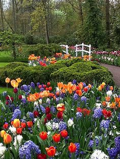 Netherlands will entice you with beautiful gardens,colorful flowers and nudge you to take long walks! Beautiful World, Beautiful Gardens, Beautiful Places, Beautiful Gorgeous, Spring Garden, Easter Garden, Dream Garden, Spring Flowers, Beautiful Landscapes