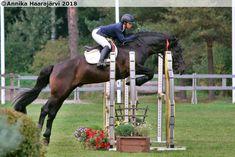 Lavilan Viljo, Finnhorse stallion Show Jumping, Horses, Animals, Inspiration, Art, Biblical Inspiration, Art Background, Animales, Animaux