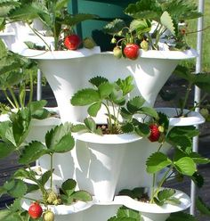33 Amazing Hydroponic Systems For Indoor Gardening