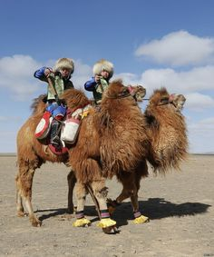 Out in the Gobi desert, thousands of Mongolia's camels are taking part in a beauty festival  bbc.in/25vFsRF