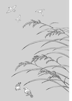 Vector line drawing of flowers-33(Rice, birds) Free Vector / 4Vector