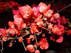 santa rita : me encantan estas flores   ahorayya2