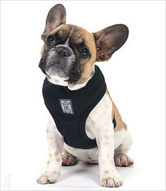Lightweight, airmesh dog harness designed just for toy dog breeds and small dog breeds. This cushioned harness is perfect for walks because it gives your dog support in all of the right places and rel