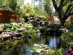 Large Bakcyard pond with natural stone
