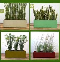 Plantas ornamentales en venta de un vivero plantas Plantas jardineras exterior
