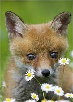Erste Begegnung mit der Blumenwelt, einem Gänseblümchen.