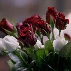 deep, dark red roses...love ♥