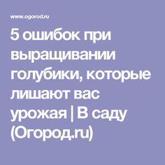 5 ошибок при выращивании голубики, которые лишают вас урожая   В саду (Огород.ru)