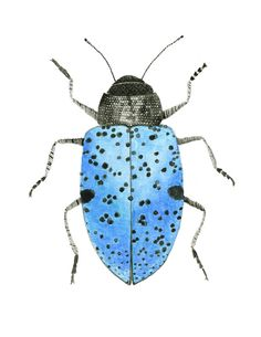 Check out this item in my Etsy shop https://www.etsy.com/listing/257940212/pretty-blue-beetle-art-beetle-art
