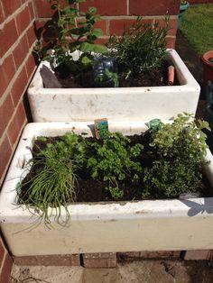 Butler / Belfast sink herb garden Can't wait to plant my herbs in my Belfast sink