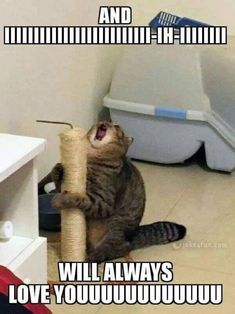 27 Animal Memes That Are Cute, Funny, and Totally Worth Looking At - World's largest collection of cat memes and other animals Really Funny Memes, Crazy Funny Memes, Cute Memes, Stupid Funny Memes, Funny Relatable Memes, Haha Funny, Funny Quotes, Funny Stuff, Dog Quotes