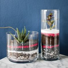 24 Super Ideas For Succulent Terrarium Sand Cactus Terrarium Diy, Terrarium Centerpiece, Colorful Succulents, Hanging Succulents, Cacti And Succulents, Farbiger Sand, Sand Art, Sand Painting, Succulent Bowls